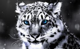 White Tiger 1440x900hebus orgHigh Definition WallpapersHD 975