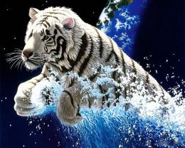 TIGER WALLPAPERS: Best White Tiger Wallpapers 815