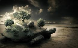 Elephants on a turtle on the beach wallpapers and imageswallpapers 156