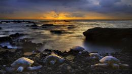 Wallpaper beach, sunset, clouds, turtle, Rock, Turtles on the beach 789