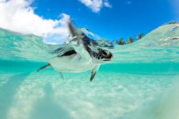 Endangered Baby Green Sea Turtle | Hidden Gem Travel Agency 893