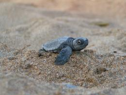 Baby Turtles On The Beach Wallpaper Sea turtle wallpaper for free 791