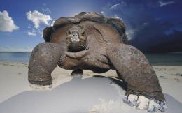 Close up photo of a big turtle on the beach | HD turtles wallpapers 570