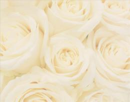 wedding roses wallpaperweddingdressin com 1533