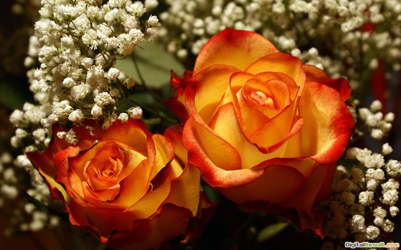 Free Romantic Roses Wedding Bouquet, computer desktop wallpapers 1775