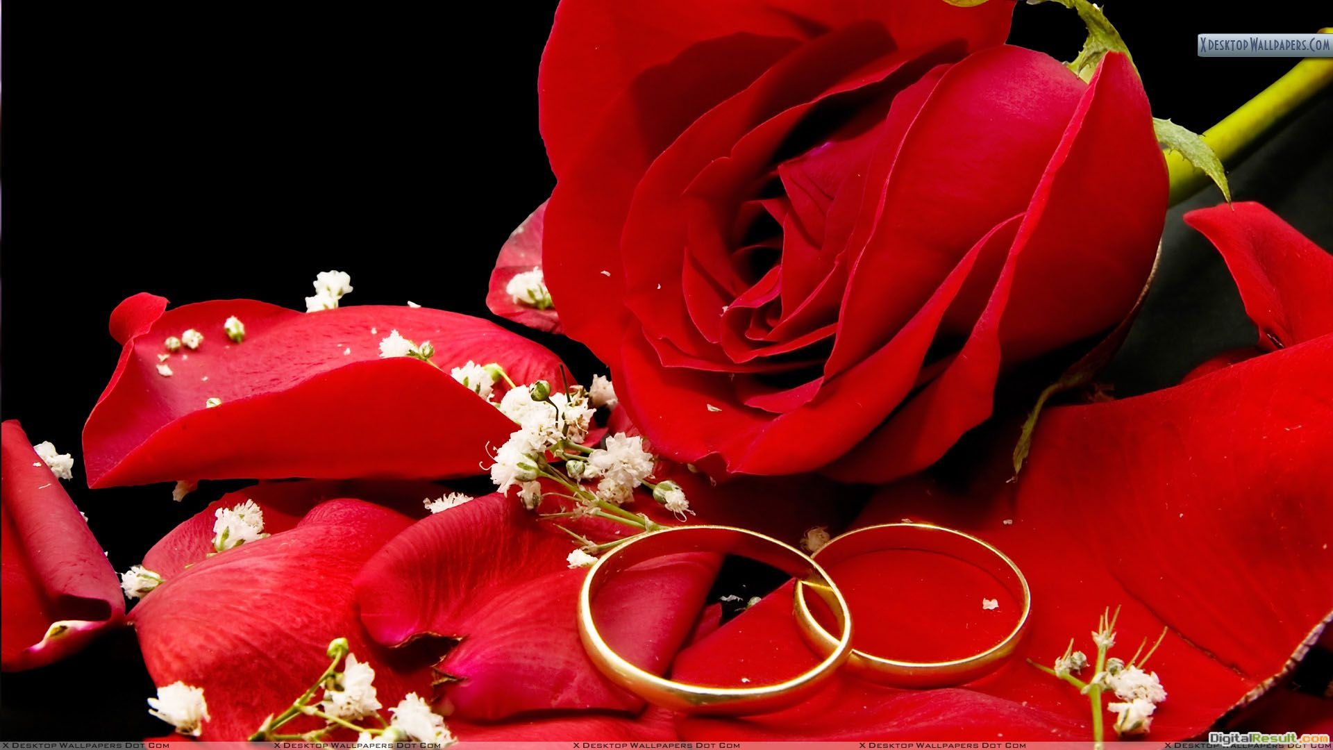 Two Wedding Golden Rings With Red Rose Wallpaper 290