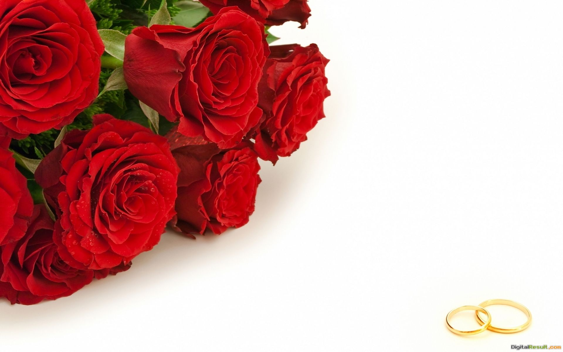 Red roses and golden wedding rings wallpapers and imageswallpapers 439