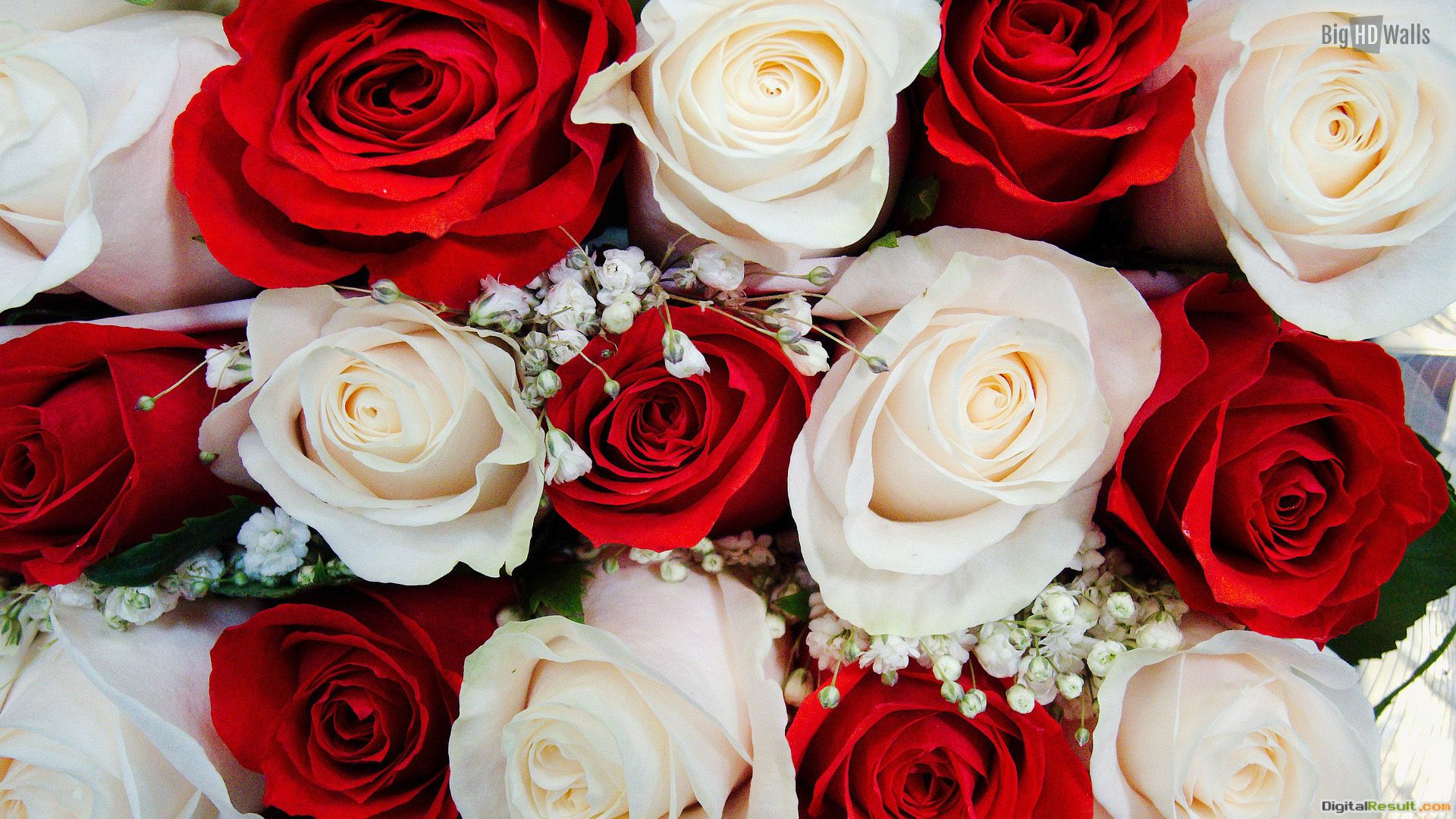 Wedding Flowers Red And White Roses Red and white roses wallpaper 850