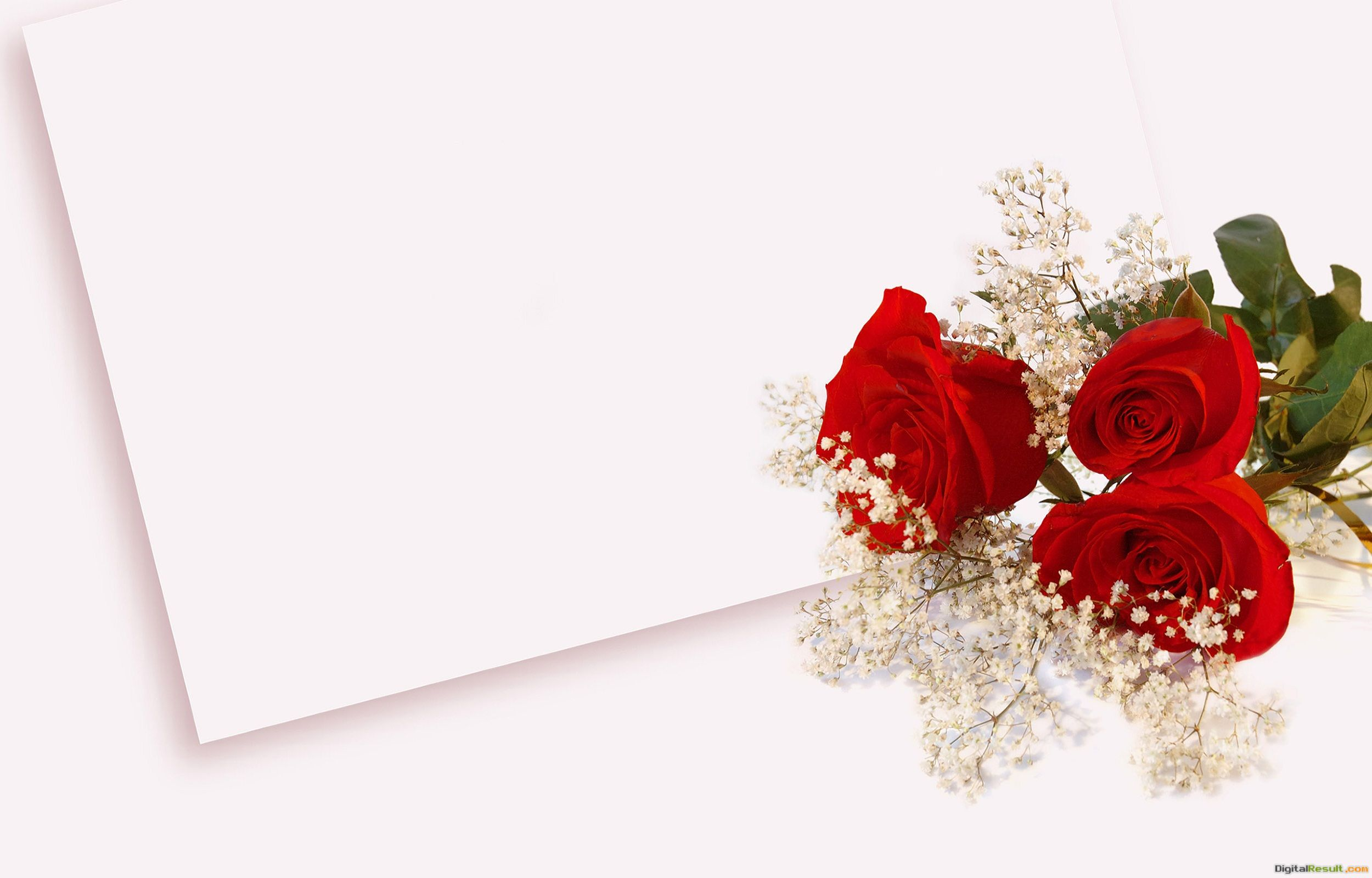 Rose For You Love Cards Greetings Wishes HD 1080p | HD Wallpapers 1599