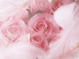 Wedding Roses BackgroundsWedding Roses Backgrounds 377