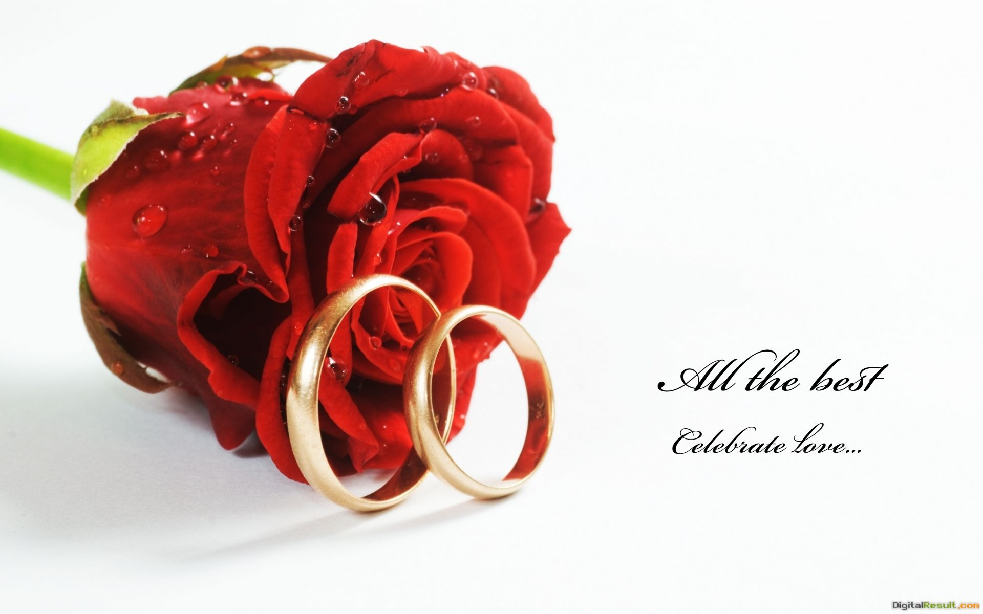 Beautiful Red Rose And Ring Wedding Wallpaper #5215 Wallpaper | High 1485