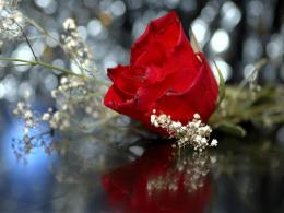 Free Wedding Red Rose, computer desktop wallpapers, pictures, images 1185