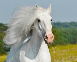 Summer White Horse Beauty Animal hd wallpaper #1132879 552