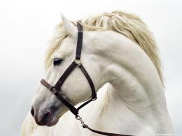 This Horse 689 Wallpaper Viewed 2048 Persons Pictures to pin on 1129