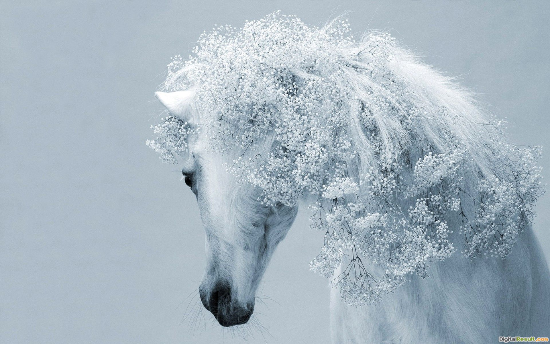 Beautiful white horse wallpapers and imageswallpapers, pictures 584