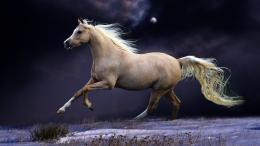 White Horse Running Hd Wallpaper | Wallpaper List 720