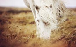nature, field, summer, grass, white horse, photo, image, hd 966
