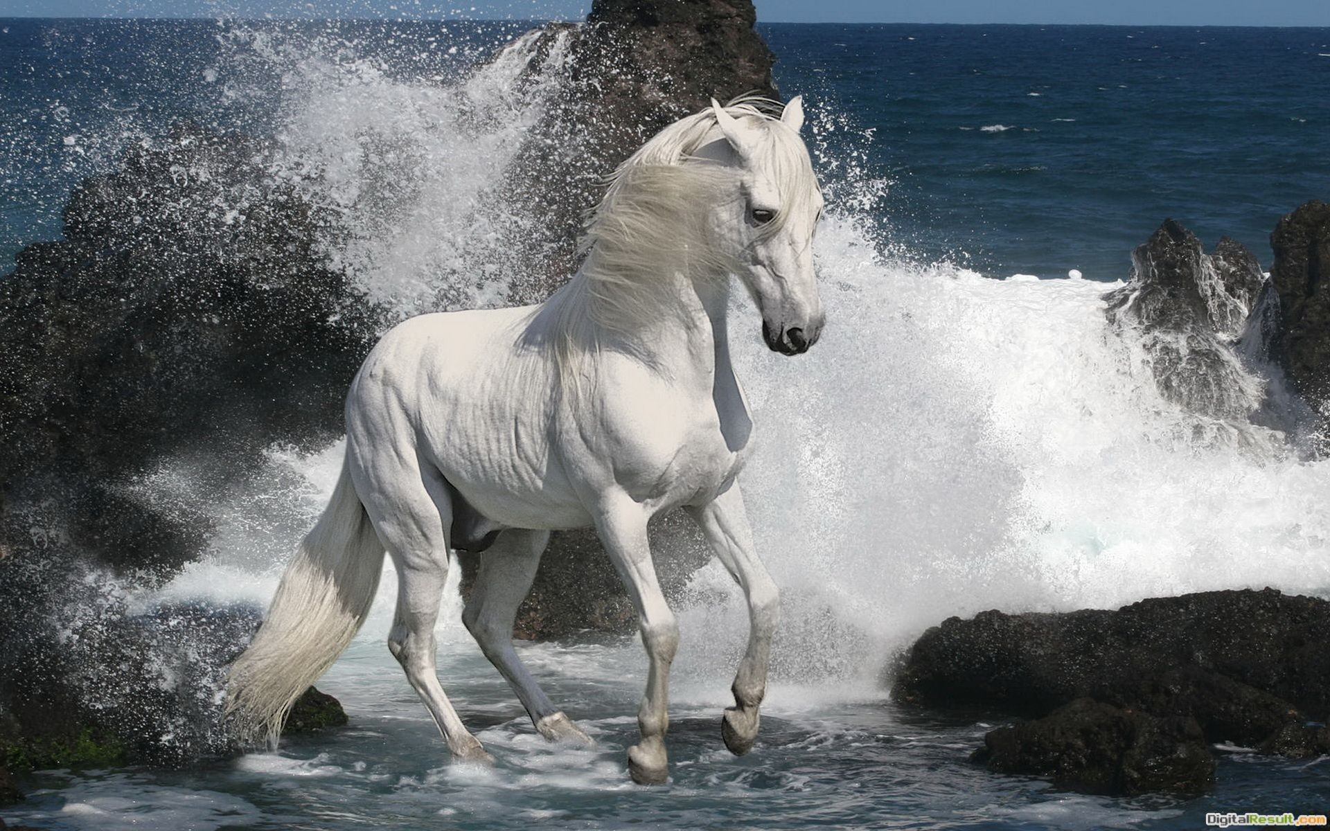 White stallion wallpapers and imageswallpapers, pictures, photos 705