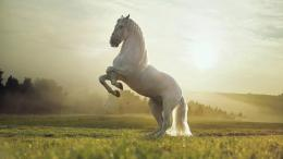 White horse reared wallpapers and imageswallpapers, pictures 1519