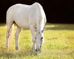 White Horse Summer wallpaper 421