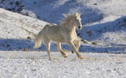 White Horse Running WallpaperHD Widescreen ArchivesHD Wallpapers 1988