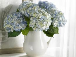 Hydrangea Desktop WallpaperHD Wallpapers Backgrounds of Your Choice 898