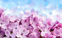 Purple Hydrangea WallpapersWallpaper, High Definition, High Quality 830