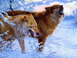 Winter Wolves wallpapers and imageswallpapers, pictures, photos 468