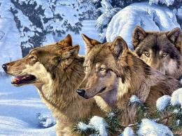 Wolves images Winter Wolves HD wallpaper and background photos915862 104