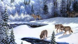 Winter Wolf Wallpapers in HD QualityHD Wallpapers Inx 842