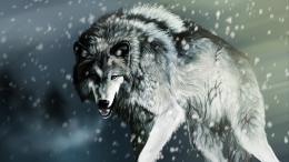 wolf in the winter Wallpaper, Computer Wallpapers, Desktop Wallpapers 1716