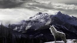 Winter Wolves WallpaperHD Wallpapers Backgrounds of Your Choice 1845